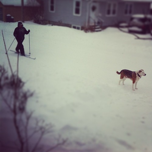 my neighbor Moira and her dog Rib-Eye on what is probably their third morning walk #maine #nemo