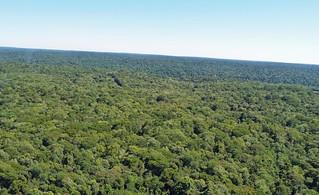 Foto de la densa selva que circunda las Cataratas de Iguazú