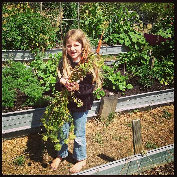 Carrots! #oldweedyones #unschooling #community
