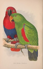 macaw(0.0), lorikeet(0.0), animal(1.0), lovebird(1.0), parrot(1.0), pet(1.0), fauna(1.0), parakeet(1.0), illustration(1.0), beak(1.0), bird(1.0),