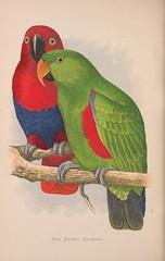 animal, lovebird, parrot, pet, fauna, parakeet, illustration, beak, bird,