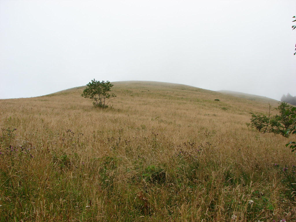 Meadow on Cascade Head