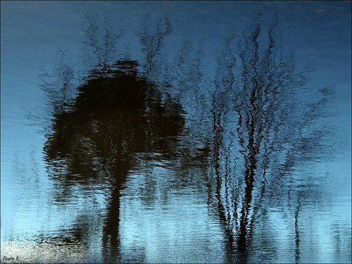 blue trees abstract nature water silhouette pond bluewater silhouettes bluesky ripples waterreflection waterreflections pondreflection waterripples abstractreflection pondreflections johnstonri abstractreflections abstractwaterreflection johnstonwarmemorialpark