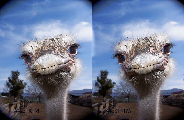 Ostrich smile 3D