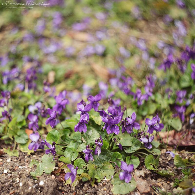 spring_ya_06