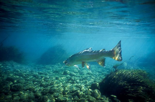fly fishing new zealand trout cedarlodge.net
