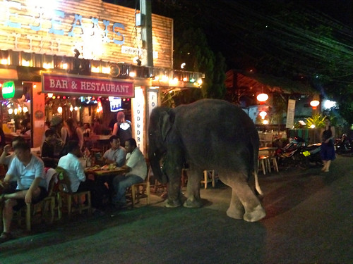 An elephant walks into a bar...