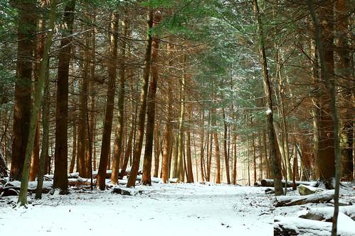 schnee winter usa snow america hiver nieve falls neve invierno neige amerika inverno アメリカ 米国 unisunited estadosunidos·etats statesohiocuyahoga