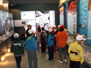 Μουσείο Φυσικής Ιστορίας Μαΐστρου