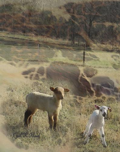 photoshop painting landscape sheep lamb inspiredbyhim alittlebeauty gailpiland me2youphotographylevel1