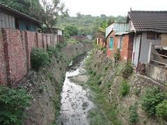 自強新村聚落中的湧泉,仍能發現豐富的生態樣貌。(攝影:邱郁文)