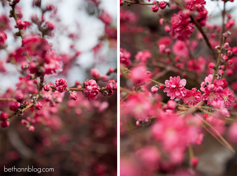 photos with trees in bloom
