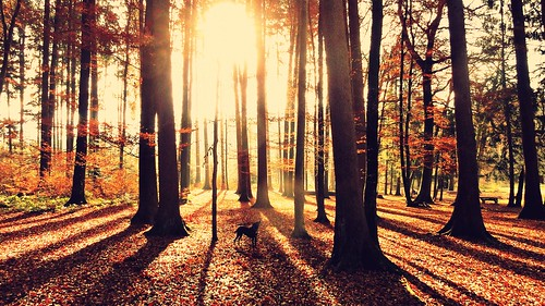 trees nature sunshine forest sunrise landscape switzerland shadows