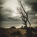 ~Navajo Night Sky~ by cheryl c.