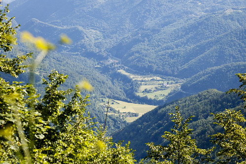 hill montenegro mountain tree valley kolašin me