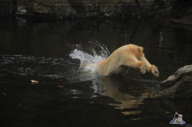 für Lachs springt Tosca auch ins Wasser