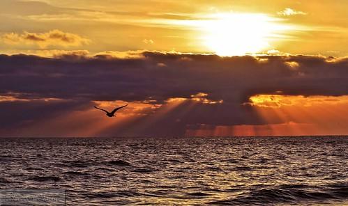 sunrise fernandina beach fl