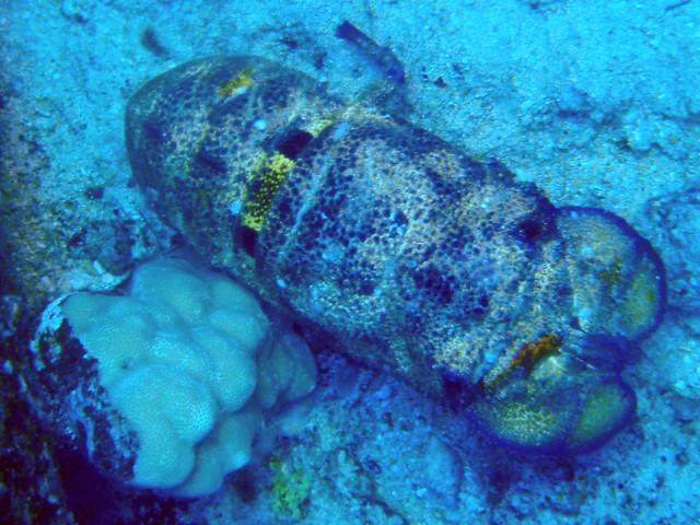 Hawaiian Slipper Lobster - Bing images