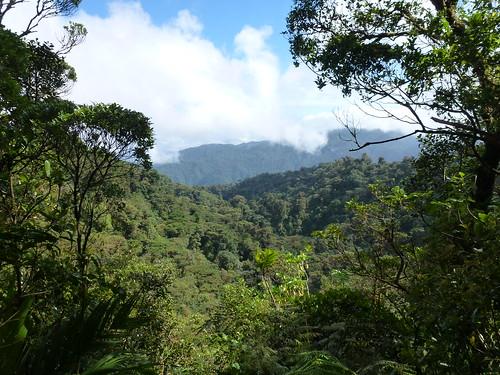 Santa Elena Cloud Forest Reserve - 2