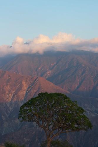 árbol tree chicamocha sunset atardecer nubes clouds cañóndelchicamochacanyon santander colombia