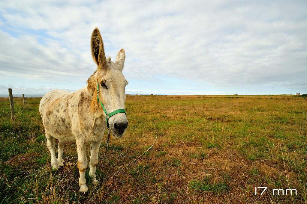 Wide Angle Donkey