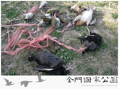 取締違法鳥網(1020115)-03