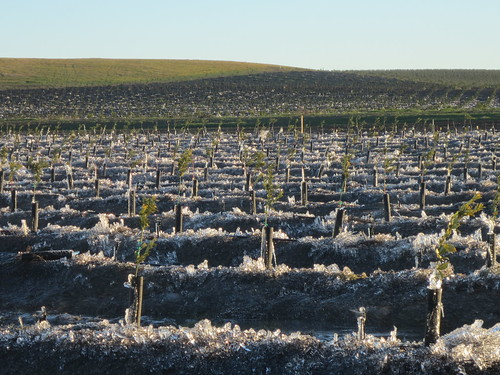 Your Farm News in Photos - Frozen Madarin Orchard