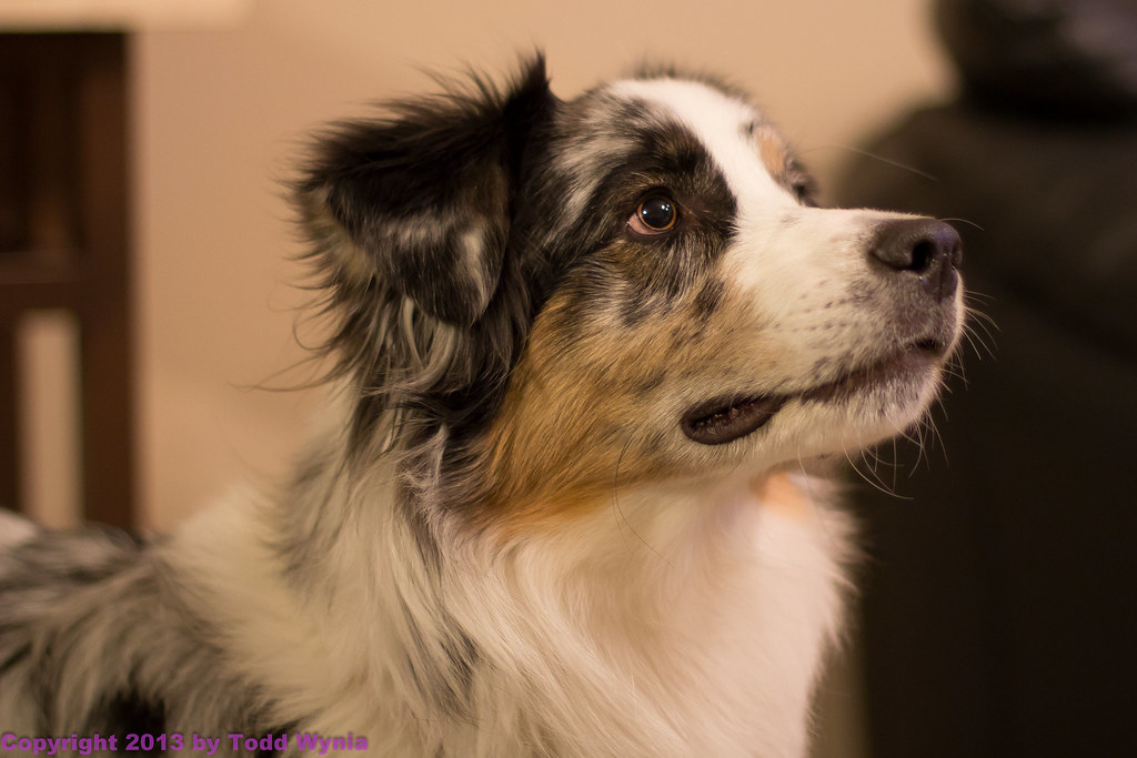 a wide aperture photo taken by gilbertdogs with a Canon EOS 60D on Jan 16, 2013