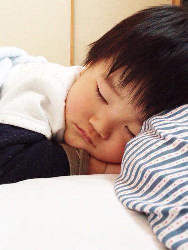 お昼寝とらちゃん 2013/1/26