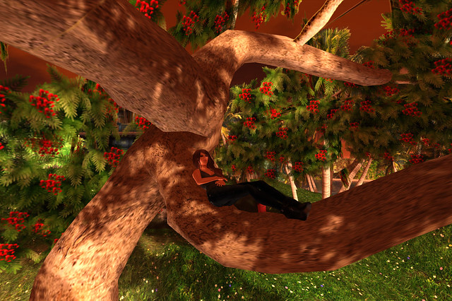 Tree at Daydream Island