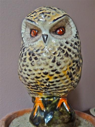 My Little Owl by Irene.B.