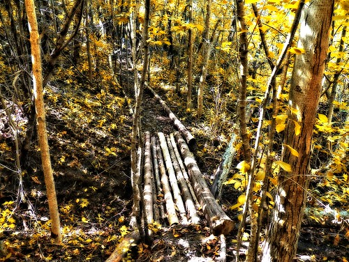 wood autumn fall forest woods path thegalaxy rememberthatmomentlevel1