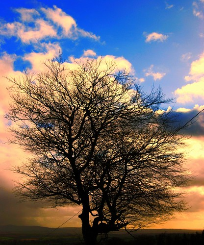 Evening Tree in February