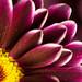 Flower Patterns by Trailheads