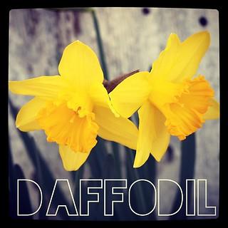 Garden Alphabet: Daffodil