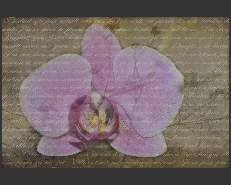 Orchids are natures poetry.....
