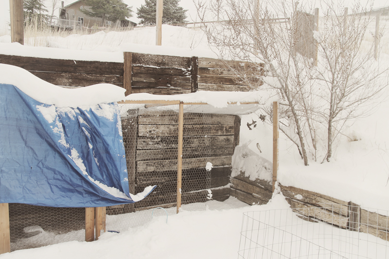 snowy-chicken-coop