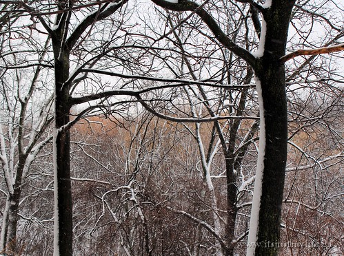 Snow Storm Toronto 2013 02 27 (4)