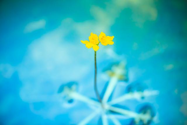 wildflower 09_0283.jpg