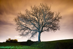 [フリー画像素材] 自然風景, 樹木, 朝焼け・夕焼け ID:201303130400