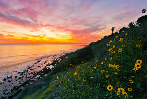 ocean california flowers sunset wild tree green beach reflections coast spring colorful day pacific palm hillside verdes rugged palos pwpartlycloudy
