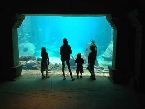 Atlantis Shane iPhone 17
