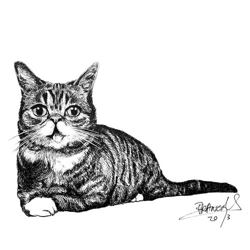 """, Lil Bub is a female """"perma-kitten"""" house cat born with several genetic mutations causing dwarfism, polydactylism and disformed lower jaw. Bub rose to fame online after videos of her began being uploaded to YouTube in November of 2011. This famous cat is g, My cartoon Blog, My cartoon Blog"""