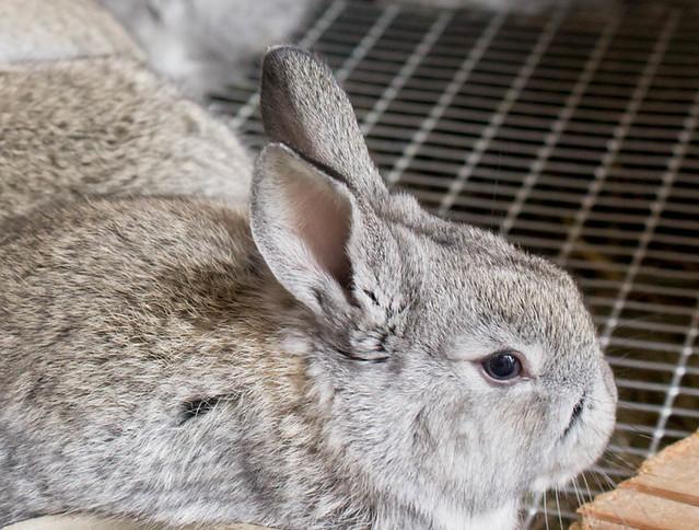 baby bunnies8 (1 of 1)