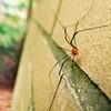 The itsy bitsy spider ran! #spider #arachnid