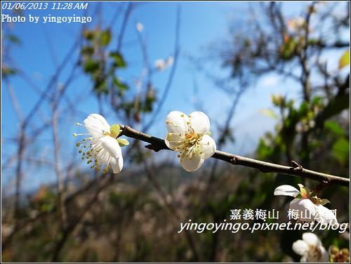 嘉義梅山_梅山公園20130106_R0071443