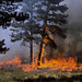 Prescribed Fires on OSMP