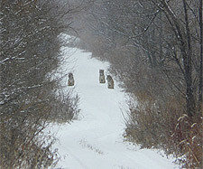 <p>Three orphaned Siberian tiger cubs sitting on a snowy trail. (WCS)</p>