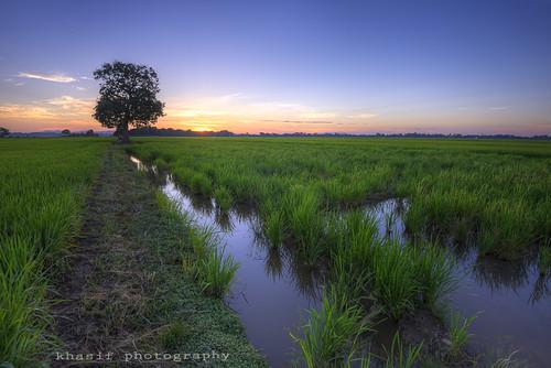 morning blue green water yellow sunrise nikon malaysia paddyfields kedah d600 nikkor1635mm