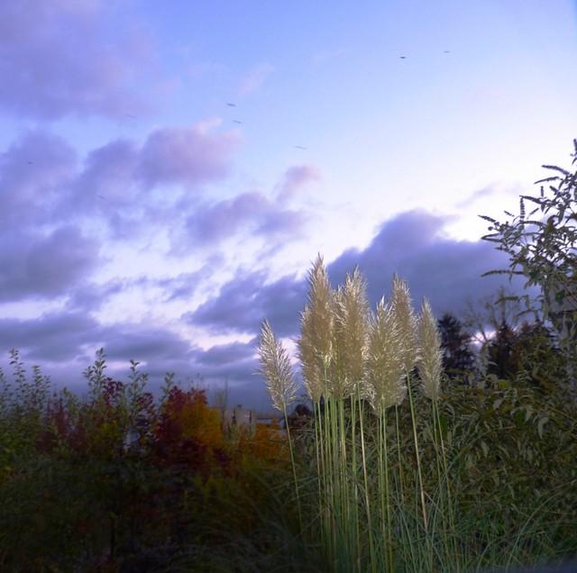 Skyscape in Feldbrunnen